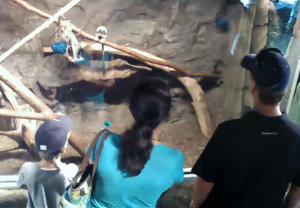 webcams zoos et parcs animaliers